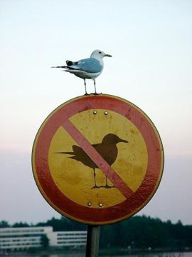 oiseau_interdit