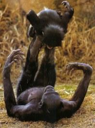 bonobo-maman-enfant-01
