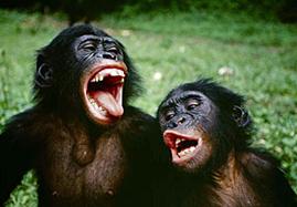 bonobo9yg