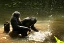 bonobosex1