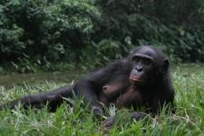 lr-bonobo-07-259-084