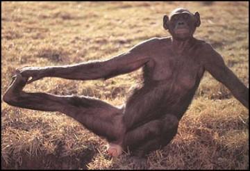 medium_bonobo
