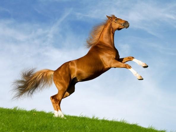 bavarian-chesnut-horse